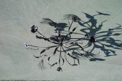 Lampadario fiori